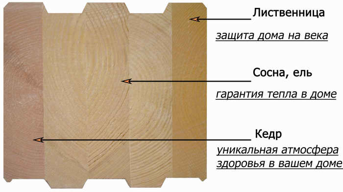 кедр-сосна-лиственница с подписями